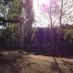 Сегодня приходите на лесной субботник в Сертолово